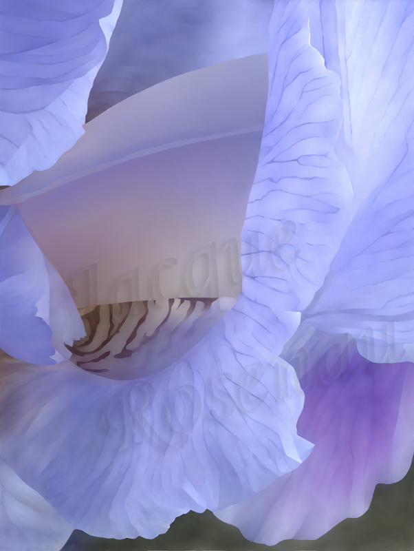 ©Jacque_Rosenau_Blue_Iris