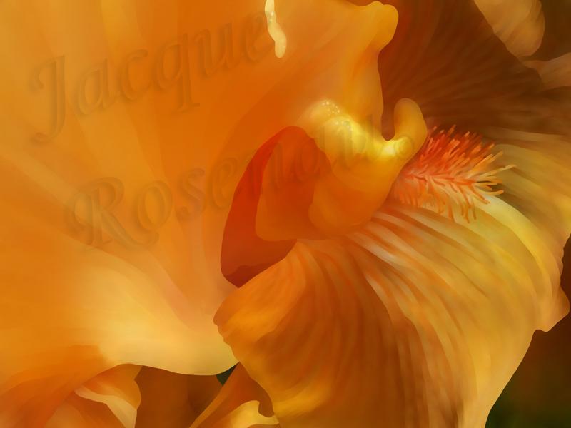 ©Jacque_Rosenau_Orange_Whip
