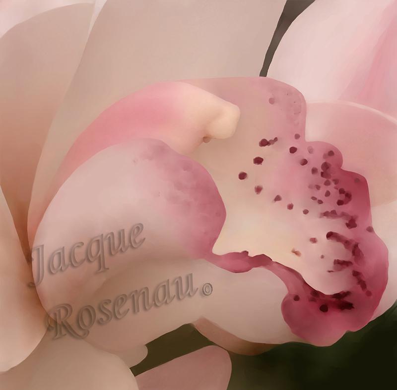 ©Jacque_Rosenau_Baby_Orchid