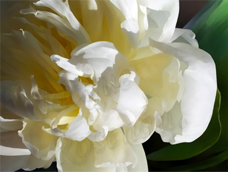 peony-soft-butter