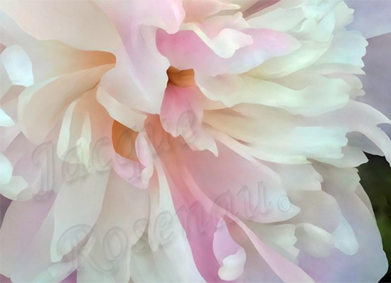 peony-tender-pink