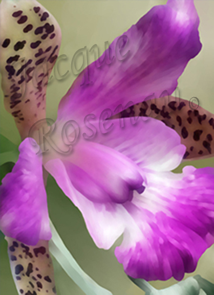©Jacque_Rosenau_Bubbies_orchid